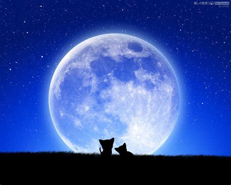Cats and the Full Moon - 癒しの風景 - image RELAXATION (癒し壁紙)
