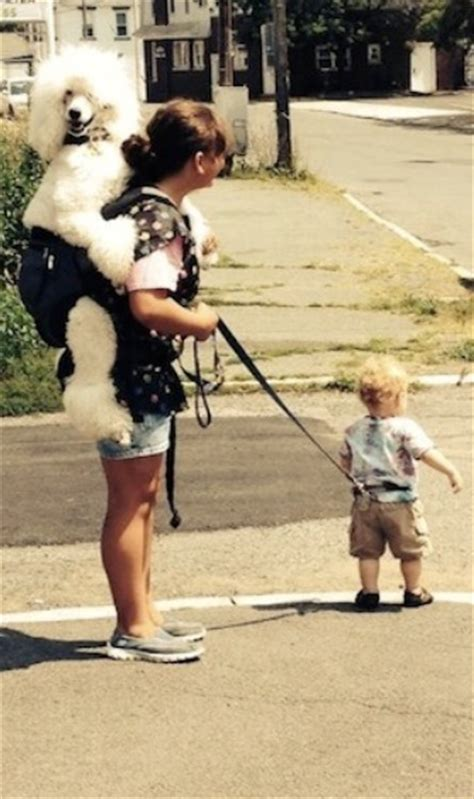 Just Going for a Walk: Son on Leash, Poodle Riding